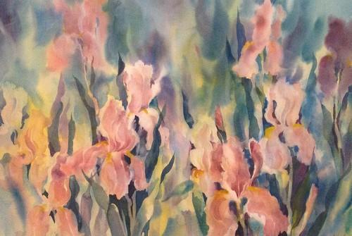 Iris Profusion
